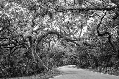 Fort Clinch Live Oaks Art Print by Dawna  Moore Photography