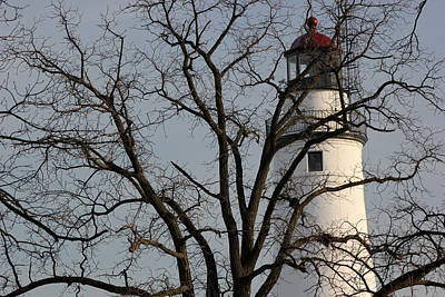 Photograph - Fort Gratiot Light Through Tree by Mary Bedy