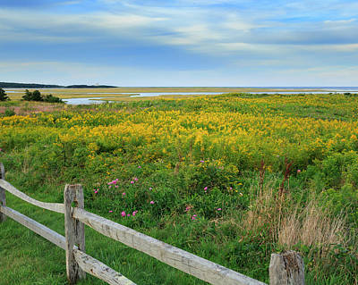 Goldenrod Photograph - Fort Hill Area Cape Cod  by Bill Wakeley