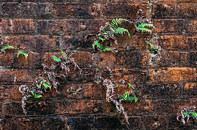 Architecture Photograph - Fort Macomb Ferns by Andy Crawford