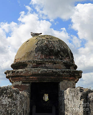 Photograph - Fort Pigeon by Mary Haber