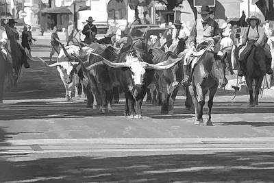 Cattle Drive Photograph - Fort Worth Herd Cattle Drive by Jonathan Davison