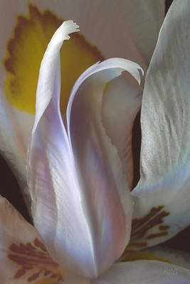 Photograph - Fortnight Lily Composition No 3 by Ben and Raisa Gertsberg