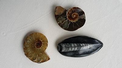 Cufflinks Photograph - Fossil Cufflinks by Mark Victors