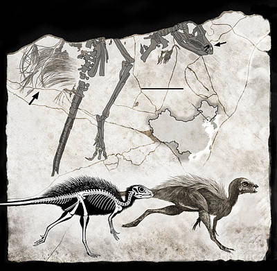 Fossil Reconstruction Digital Art - Fossil Remains And Skeletal by Roman Garcia Mora