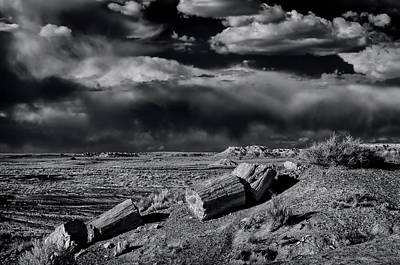 Petrified Forest Arizona Photograph - Fossilized And Petrified Trees by Jerry Ginsberg