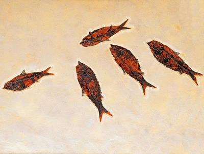 Fossilized Fishbritish Columbia Canada Art Print by Thomas Kitchin & Victoria Hurst