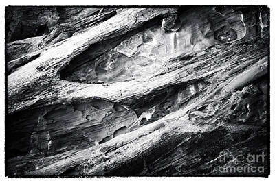 Photograph - Fossilized by John Rizzuto
