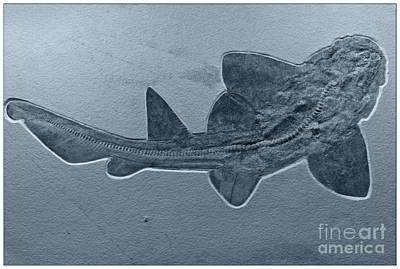 Decorative Fossil Photograph - Fossils Shark by Heiko Koehrer-Wagner