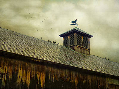 Photograph - Foul Weathered Roost by Kim Swanson