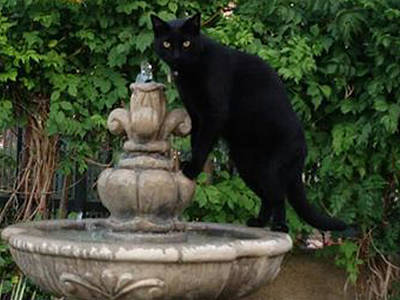 Photograph - Fountain Cat by Alison Stein