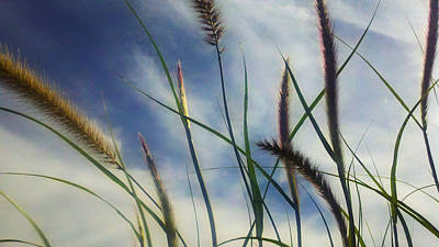Print featuring the photograph Fountain Grass by Richard Stephen