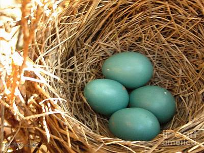 Painting - Four American Robin Eggs by J McCombie