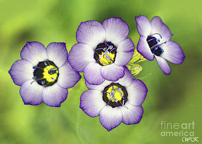 Photograph - Four Beauties by Wanda Krack