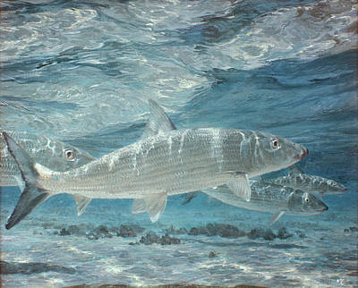 Four Bonefish Up With The Tide, 1972 Art Print by Stanley Meltzoff / Silverfish Press