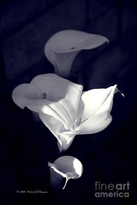 Photograph - Four Calla Lilies In Shade by Richard J Thompson