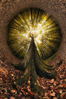 Leaves Photograph - Four Centuries High by Francois Casanova