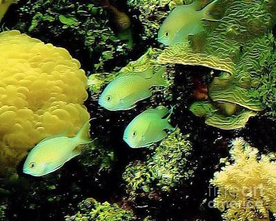 Photograph - Four Chromis Green Fish by Janette Boyd
