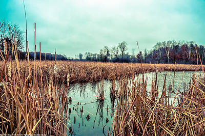 Photograph - Four Corners Wetlands by Michelle Ressler