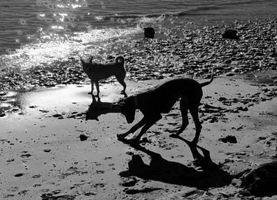 Photograph - Dog Magic by Rosanne Licciardi
