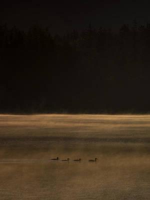 Four Ducks Art Print by Aaron Bedell