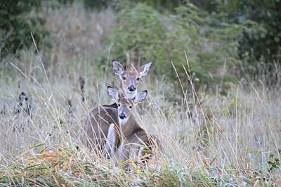 Photograph - Four Eyes by Bonfire Photography