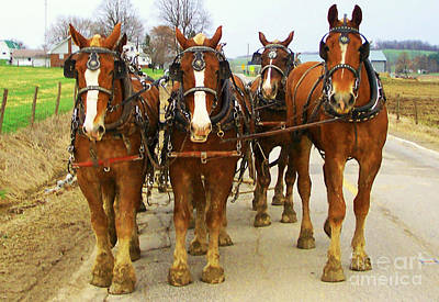 Four Horse Power Art Print by B Wayne Mullins