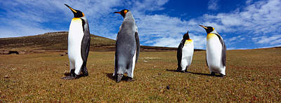 Four King Penguins Standing Art Print by Panoramic Images