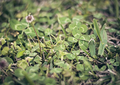 Photograph - Four Leaf Clover by Heather Applegate