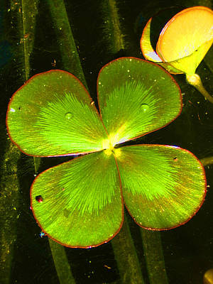 Photograph - Four Leafed Clover by Amber Nissen