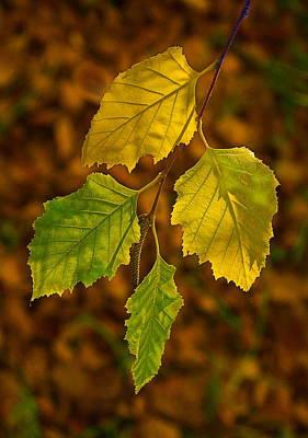 Four Leaves In Light Print by Viktor Savchenko
