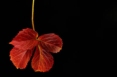 Photograph - Four Leaves by Marwan Khoury