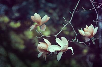 Four Magnolia Flower Art Print by Marianna Mills