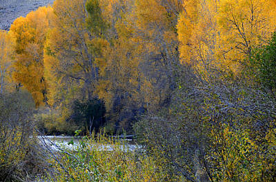 Robert Walker Photograph - Four Mile Creek by Robert Walker