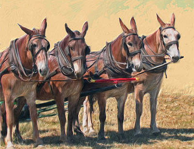 Painting - Four Mules Draft Team by Bethany Caskey