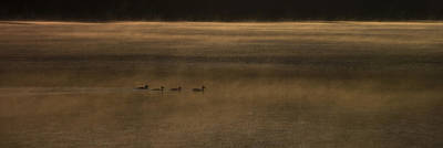 Four O Duck In The Morning Art Print by Aaron Bedell