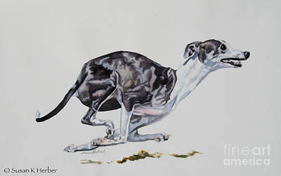Greyhound Races Painting - Four Off The Floor by Susan Herber