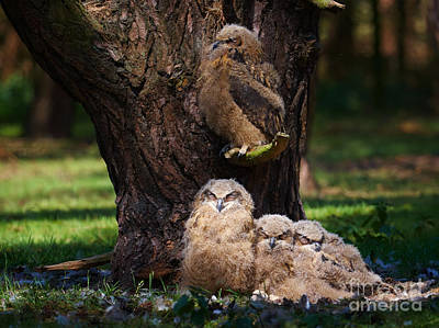 Photograph - Four Owl Chicks In A Dark Forest by Nick  Biemans