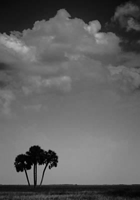Photograph - Four Palms by Bradley R Youngberg