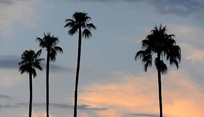 Photograph - Four Palms by Mark Sullivan