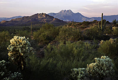 Photograph - Four Peaks With Cholla Cactus by Dave Dilli