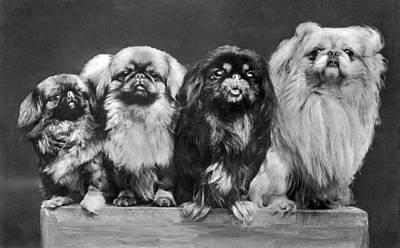 Four Pekingese On A Box Art Print