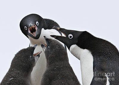 Four Penguins Print by Carol Walker