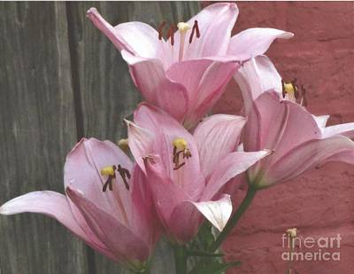 Photograph - Four Pink Asiatic Lilies by Rod Ismay