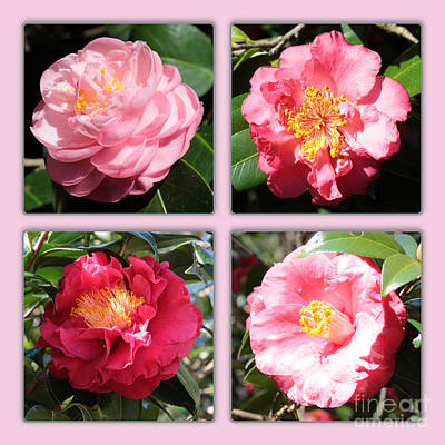 Pink Camellia Photograph - Four Pink Camellias Collage by Carol Groenen