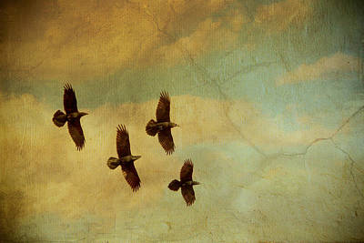 Bif Mixed Media - Four Ravens Flying by Peggy Collins