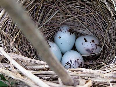 Creative Blackbird Painting - Four Red-winged Blackbird Eggs by J McCombie