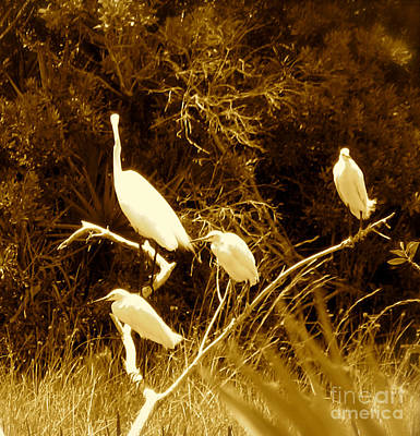 Photograph - Four Resting Egrets by Anita Lewis