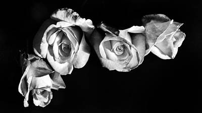 Photograph - Four Roses by Marianna Mills