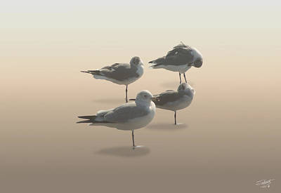 Digital Art - Four Seagulls On Sand Key by IM Spadecaller